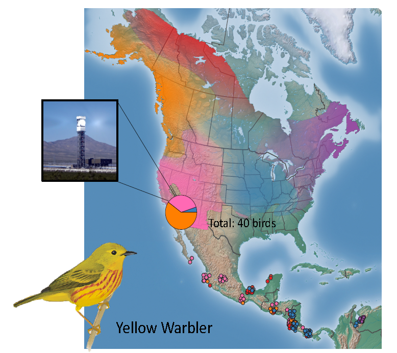 Genoscape map showing genetic populations of yellow warbler and the proportion of warblers killed at the Ivanpah Solar Electric Generating System from these populations