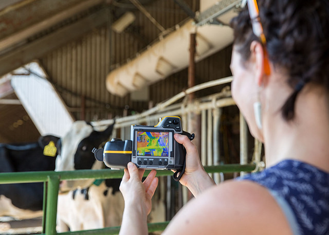 Dairy cattle cooling technologies at work at UC Davis